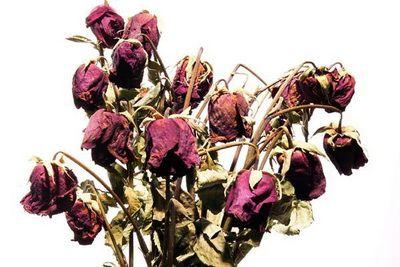 мертвые цветы с поникшими соцветиями