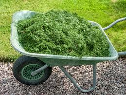 mulcha zelen