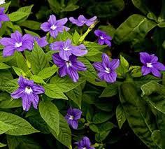 cvety tenelubivye dlya sada odnoletnie mnogoletnie
