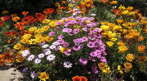 Названия сиреневых садовых цветов фото