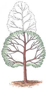 sroki obrezki yablon i grush osenju vidy obrezki (2)