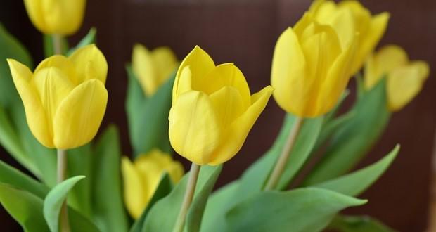 uxod za srezannymi cvetami