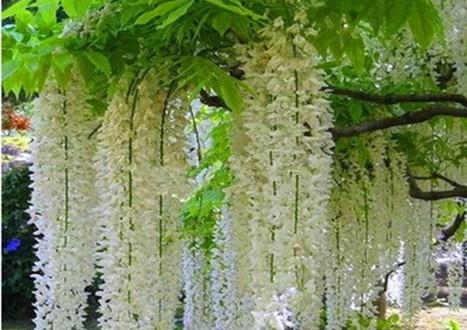 цветы для сада и огорода и фото с названиями