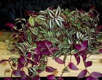 kakie cvety nelzya derzhat doma