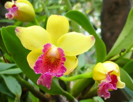 kakie komnatnye cvety nelzya derzhat doma