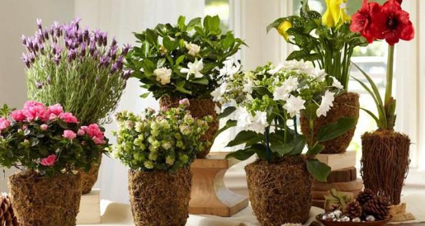Комнатные цветы по знакам зодиака