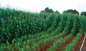 mineralnye udobreniya fosfornye primenenie