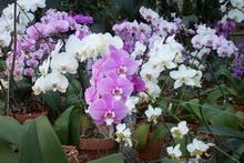 neprixotlivye komnatnye cvety