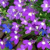 sadovye cvety odnoletnie foto i nazvaniya
