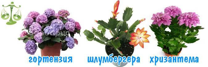 vesi-cveti