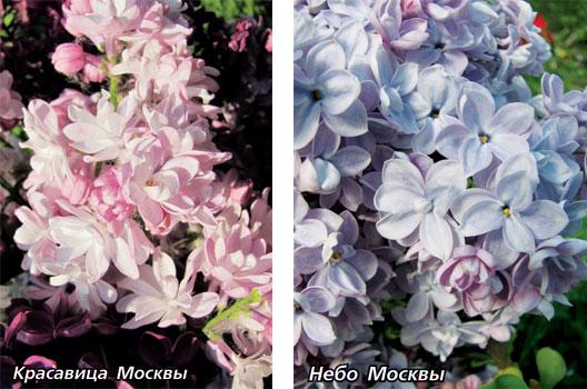 небо Москвы
