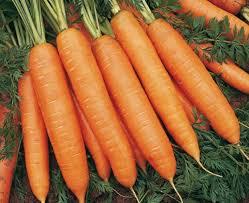 морковь сорт бангор