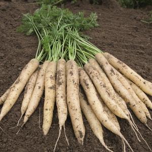 морковь бельгиен уайт