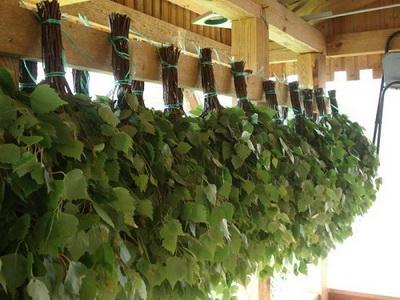 березовые веники для бани