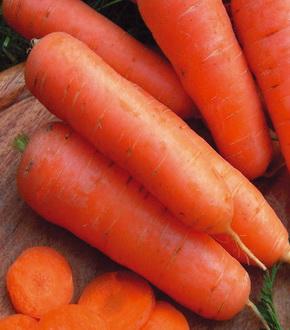 амстердамская морковь
