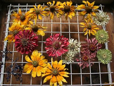 сетка для гербария