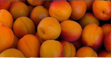 абрикос сорт краснощекий