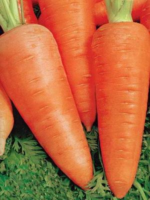 морковь сорт аленка