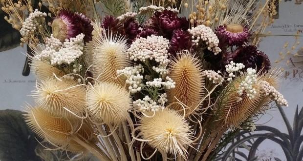 цветы для гербария