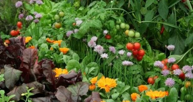 цветы против вредителей