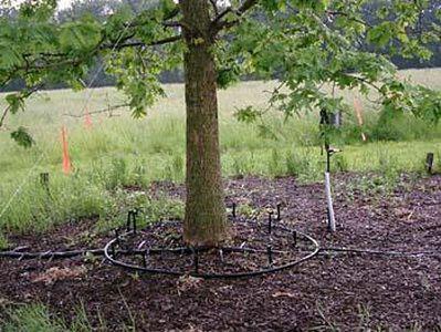 капельный полив для деревьев