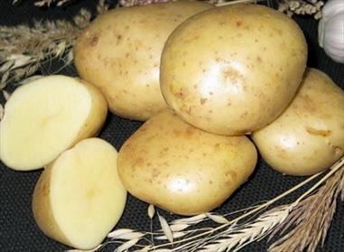 картофель Скороплодный