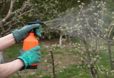 обработка яблонь до начала цветения