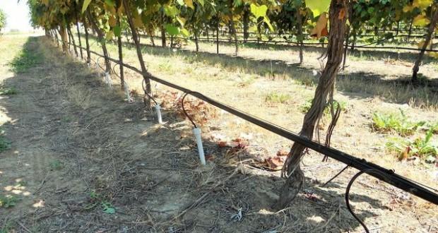 полив для винограда