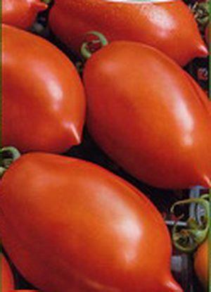 помидор Ракета