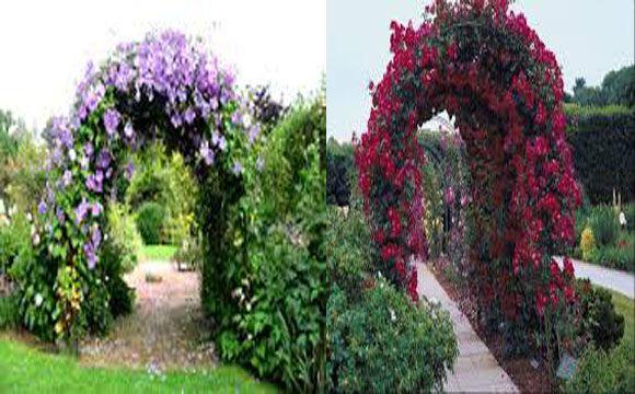 растения для арки