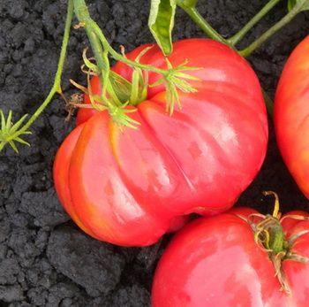 помидоры Сердце буйвола