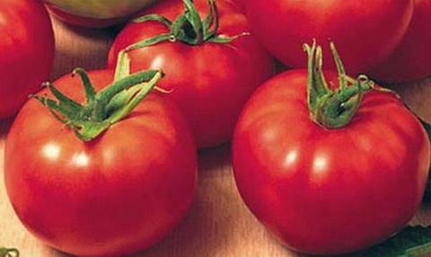 томат пятачок