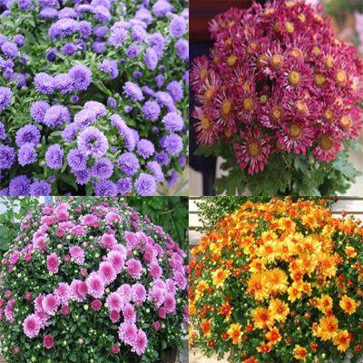 Какие цветы сажают в мае семенами