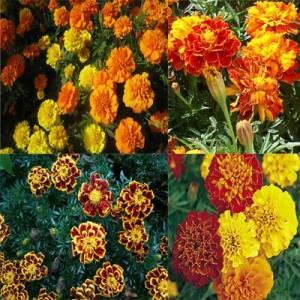 Какие цветы сажаем в июле 619