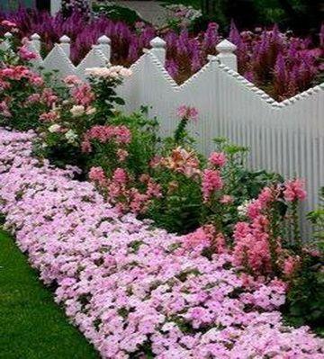 цветы и растения вдоль забора