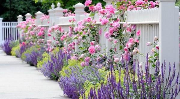 цветы вдоль забора на даче