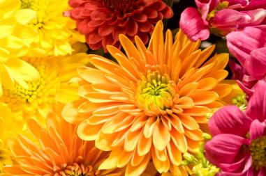 Растения цветущие осенью картинки