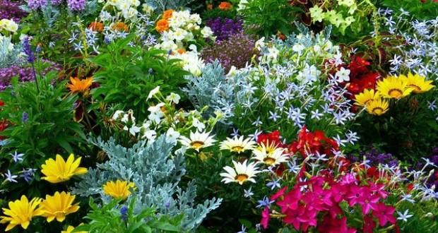 какие цветы посадить в июне