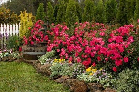 кусты и цветы вдоль забора