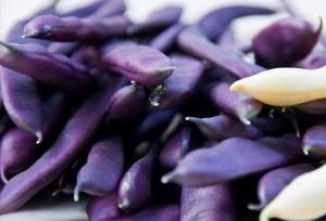 стручковая фиолетовая