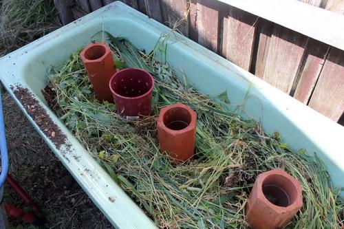 Червячная ферма в ванне