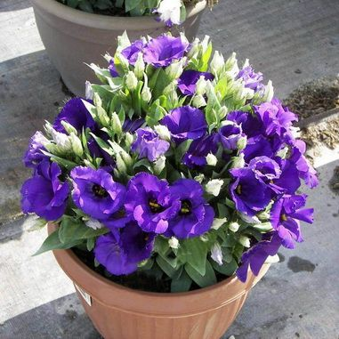 Цветок дома