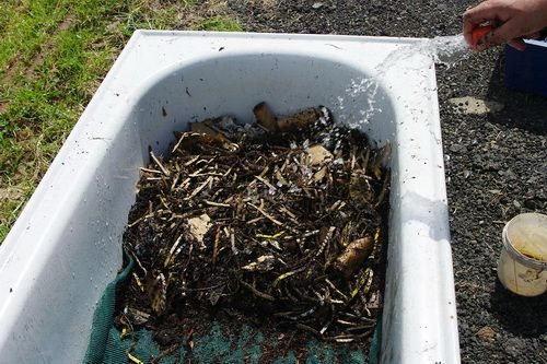 Корм и полив червей