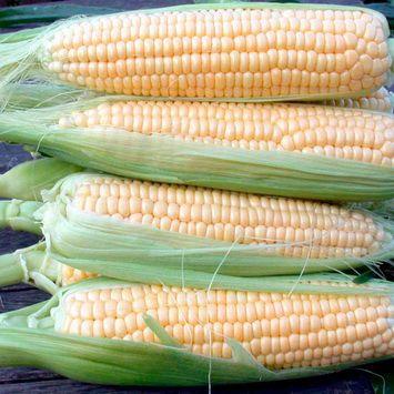 кукуруза Санденс