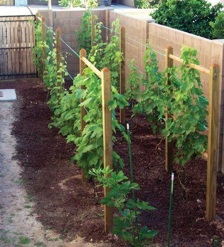 опора для винограда