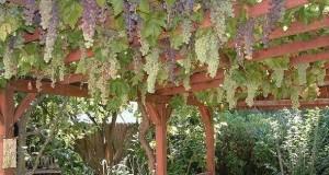 пергола для винограда своими руками