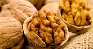 Сорта грецких орехов