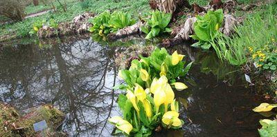 Влаголюбивые растения