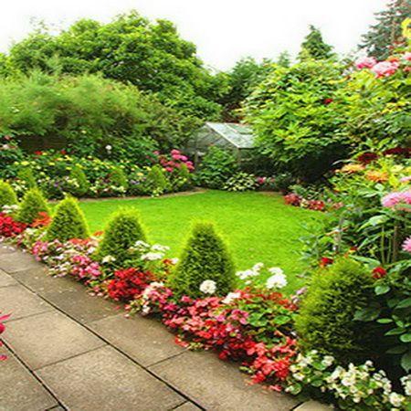 изгородь из роз и хвойных