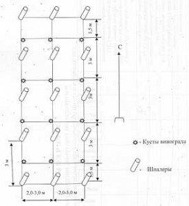 Cxema-275x300
